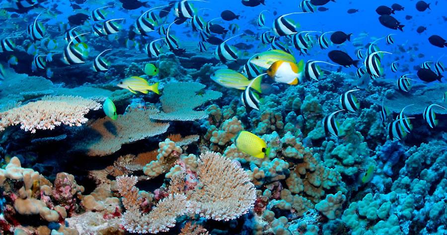Maldivler Dalış Turları, Maldivler Balayı