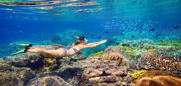 Maldivler'de Şnorkelli Yüzme